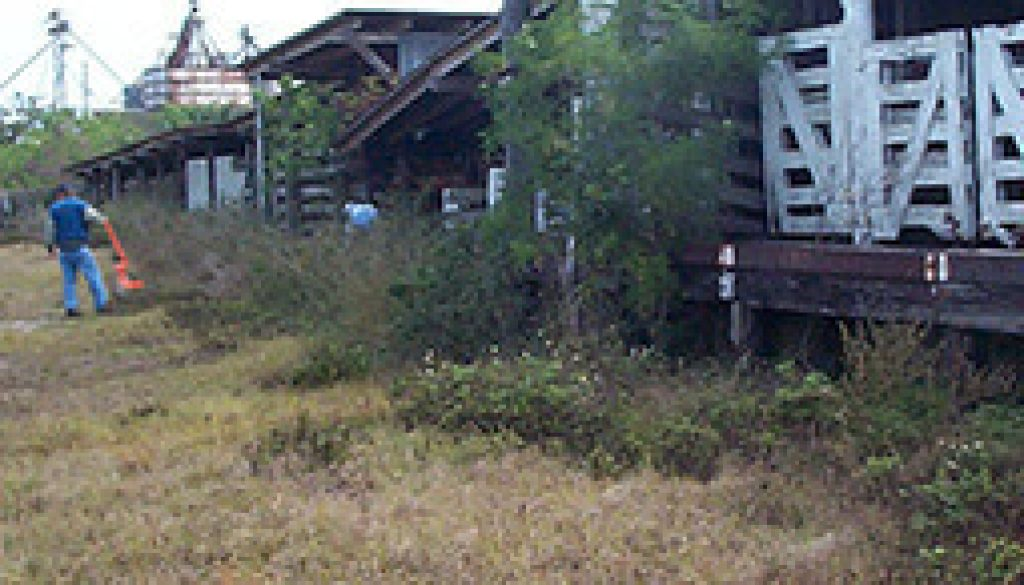 Site Remediation: Former Kissimmee Livestock Market